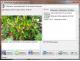 Cvetovod 1.3.05 (������ ��������� ��������)
